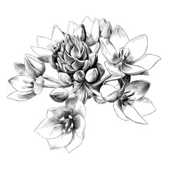 agave flower buds sketch vector graphics black and white drawing
