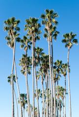 palmen gegen blauen himmel palm trees against blue sky