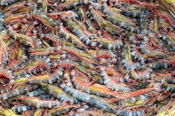 Tiger shrimp are at fish market.