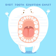 cartoon baby tooth eruption chart