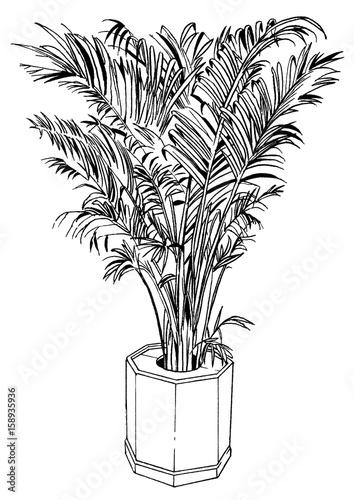 漫画風ペン画イラスト 観葉植物fotoliacom の ストック写真と