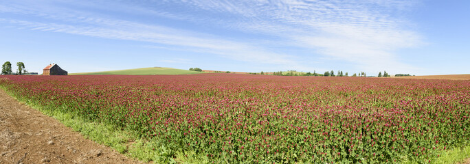 Oregon Grown Crimson Clover, Wilamette Valley, Marion County