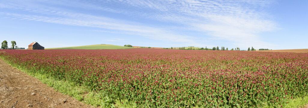 Oregon Grown Crimson Clover, Wilamette Valley, Marion County