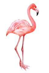 Flamingo, exotic birds isolated on white background, watercolor illustration
