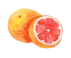 Grapefruit isolated on a white background, watercolor illustration