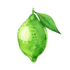 Lime with leaf isolated on a white background, watercolor illustration