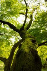 Majestic green mossy tree