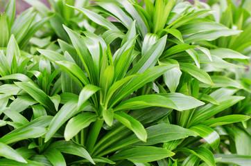 Green plant in the garden closeup