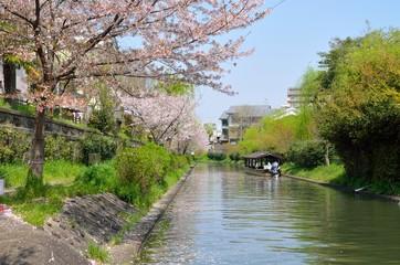 京都 春の宇治川派流