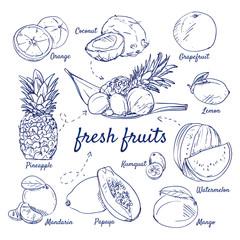 Doodle set of fresh tropical fruits - Orange, Coconut, Grapefruit, Pineapple, Mandarin, Papaya, Kumquat, Mango, Watermelon, Lemon, hand-drawn. Vector sketch illustration isolated over white background