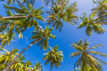 Beautiful palm trees on the beautiful landscape background. Vintage Palm Trees Vintage clear summer skies. Tropical beach palm trees relaxation zen inspirational nature background concept
