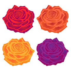 Bright vector illustration. Beautiful multi-colored roses. Flower