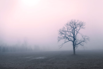 Tree caught up in early morning mist