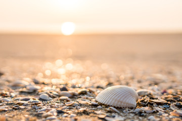 Sea shell on beach in the sunrise