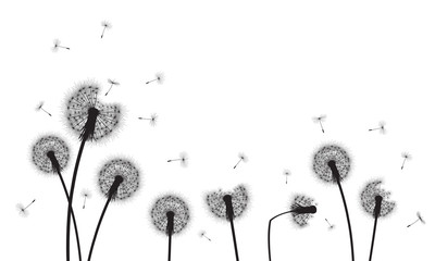 Abstract background with silhouette dandelion flowers and seeds, vector illustration.