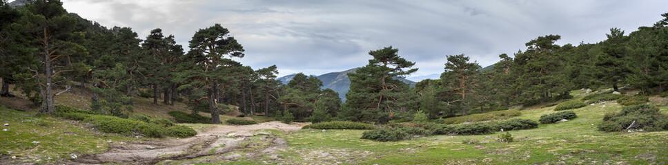 Buscar fotos por ihervas - Madrid forest ...
