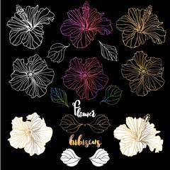 Vector elegant decorative hibiscus flowers, design elements