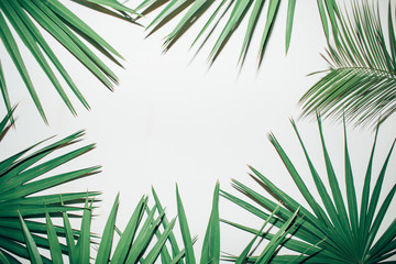 Palm leaves on a white background