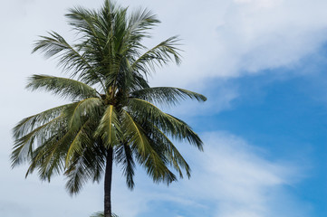 Beautiful single coconut tree with blue and cloudy sky in the background