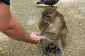 Monkey grabbing food out of my palm