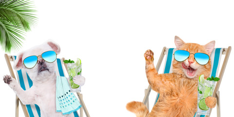 Cat and dog relaxing sitting on deckchair with cocktail on the white background.