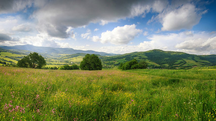 Fototapeten Gebirge Panoramic view of the blooming flowers, summer meadow in the mountains and blue cloudy sky. Alpine seasons, natural background.
