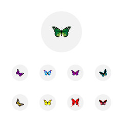 Realistic Summer Insect, Archippus, Bluewing And Other Vector Elements. Set Of Beauty Realistic Symbols Also Includes Red, Butterfly, Green Objects.