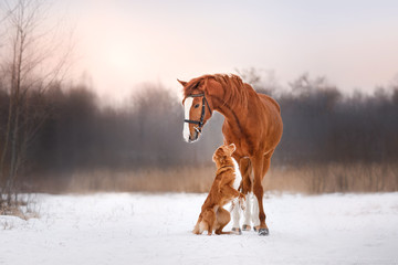 Dog and horse outdoors in winter