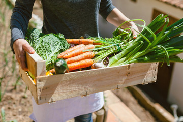 Closeup of a woman holding a wooden box of fresh vegetables in the urban garden