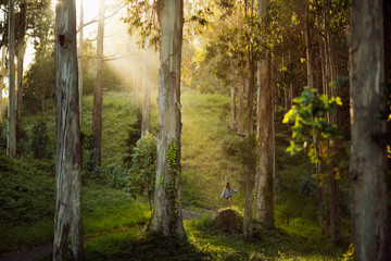 Beautiful young woman standing alone in a Eucalyptus forest
