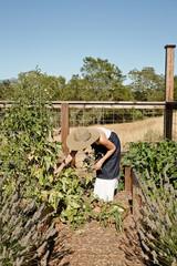 Woman gardening in her backyard vegetable garden