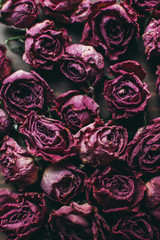 Dried roses on wooden background