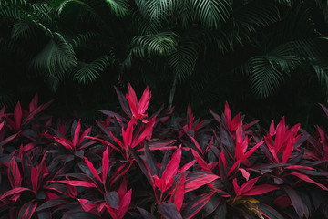 Pink tropical leaves and palm trees