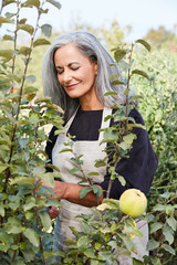 Beautiful senior woman with grey hair gardening in her garden