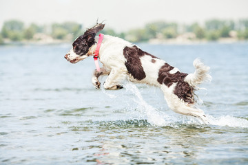 Dog Jumping Out of Water