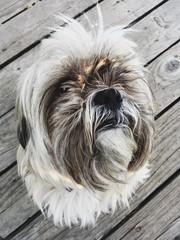 Ridiculously Cute Dog