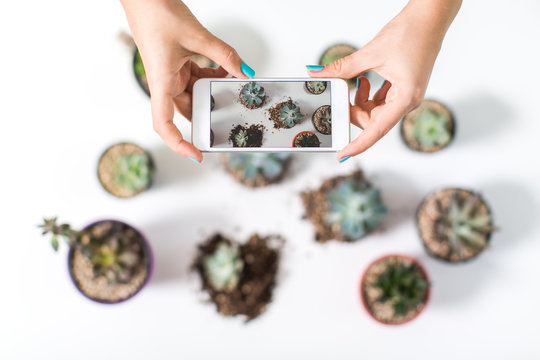 Closeup of hands taking a photo of a group of succulent plants in little pot on a white table