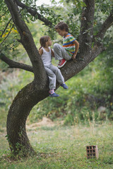 Children on a tree