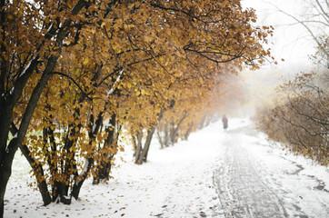 Wintery scene in the  park