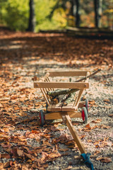 handcart with some wooden branches in an autumnal forest