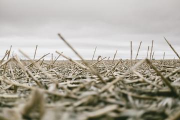 Winter Corn South Dakota