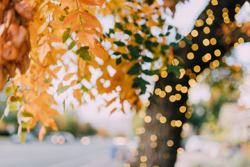 Autumn Trees covered in twinkle lights