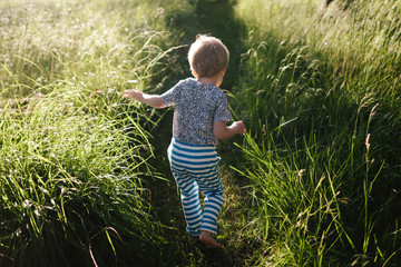 Small child walks on a path in tall grass