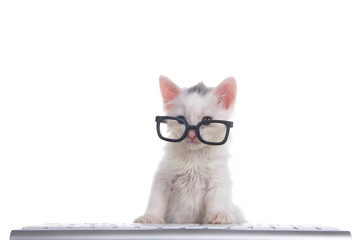 One cute adorable fluffy white kitten wearing black geeky glasses looking over the glasses slightly to viewers left, sitting in front of a computer keyboard isolated on white background.