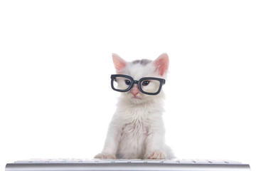 One cute adorable fluffy white kitten wearing black geeky glasses looking slightly to viewers left, sitting in front of a computer keyboard isolated on white background.