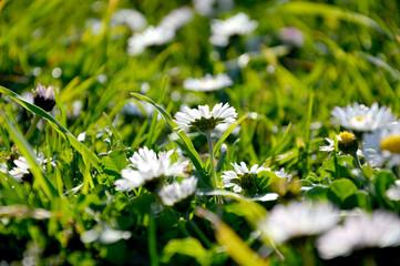 Nikon D3200..Claudia Prommegger..www.kommunikations-design.com..info@kommunikations-design.com