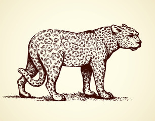 Leopard. Vector illustration
