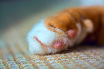 Paw of a red cat macro