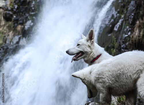 Lobos Salvajes Stock Photo And Royalty Free Images On Fotoliacom