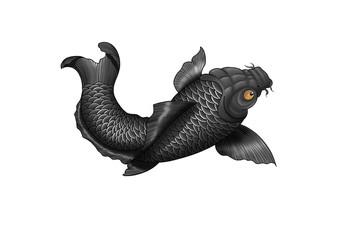 Japanese koi-fish tattoo design.